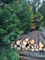 Forest Services Felling For Sale Germany - Logging/Lumberjack/Forest services