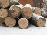 Planks (boards) , Oak (European)