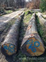 Hardwood  Logs - Saw Logs, Oak (American Red - Origin: Europe)