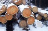 Pine (Pinus sylvestris) - Redwood