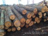 Hardwood  Logs - Alder Logs from Ukraine