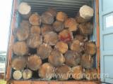 Fresh cut yellow pine logs