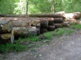 Hardwood  Logs PEFC FFC - Saw Logs, Oak (European), PEFC/FFC