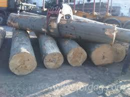 20-45-cm-Beech--Saw-Logs-from