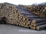 Softwood  Logs Germany - Industrial Logs, Spruce (Picea abies) - Whitewood