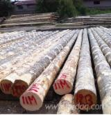 Cyprus Softwood Logs - Pine Poles