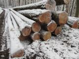 Saw Logs, Larch (Larix spp.)