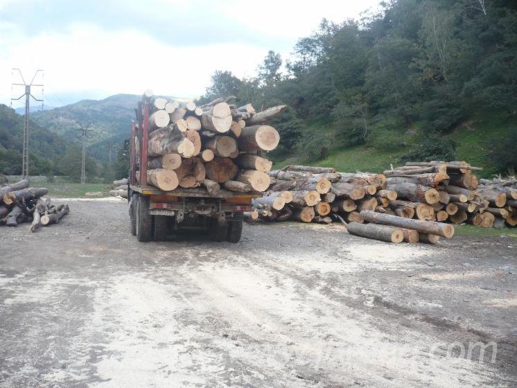 Beech--Firewood-Woodlogs