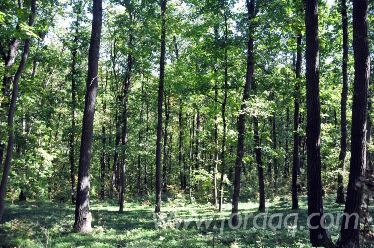 Oak-Woodland-from-Romania-200-0---1200