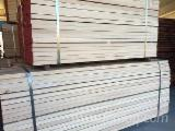 Purchase Beech Timber
