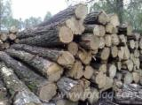 Saw Logs, Acacia