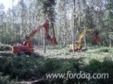 France Forest Services - Mechanized and manual felling , skidding , wood grinding