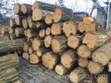 Saw Logs, Acacia, FSC