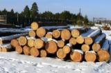 Softwood  Logs For Sale Poland - Saw logs Siberian larch