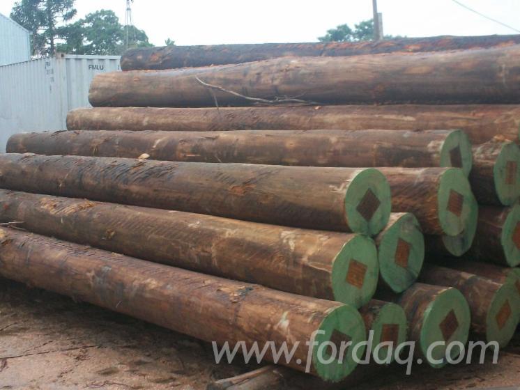 Vend Grumes De Sciage Eucalyptus Tropical Species Hong Kong