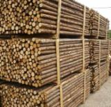 Softwood  Logs Spruce Picea Abies - Whitewood -  cylindrical trimmed round wood, Spruce (Picea abies) - Whitewood
