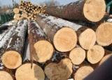 Saw Logs, Pine (Pinus sylvestris) - Redwood