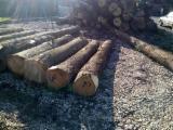 Walnut, maple and cherry veneer logs