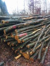 Hardwood  Logs Netherlands - Firewood, Beech (Europe)