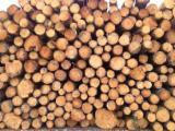 Troncos para Aserrar, Pino Radiata (Pinus radiata, insignis) (América del Sur)