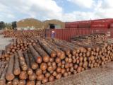Fresh Cut Construction Grade, SYP Logs (Pinus Taeda)