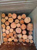 Fresh Cut Construction Grade, Pine (Pinus sylvestris) - Redwood