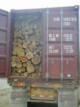 Saw Logs, Teak, Ecuador