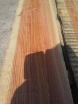 Redwood Logs