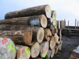 Hardwood  Logs Romania - Veneer Logs, Maple (Sycamore)(Europe)