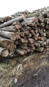 Industrial Logs, Beech (Europe)