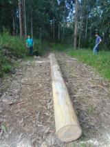 Tropical Wood  Sawn Timber - Lumber - Planed Timber - Eucalyptus sawn timber for sale