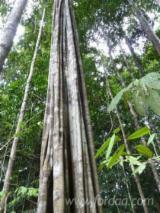 Tropical Wood  Logs Netherlands - Acaraqua or Pari Udu logs