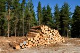 Standing Timber - Looking for a trusted sponsor on my 40 hectares timber-plantations-forests farm