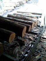 Complete Production Line, Sawmill, Primultini