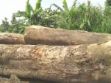 Tropical Wood  Logs - SAPELLI WOOD LOGS AND LUMBER