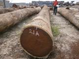 Tropical Wood  Logs For Sale - Wenge wood logs