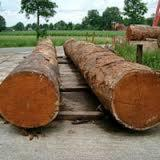 Tropical Wood  Logs For Sale - OBECHE AYOUS WOOD LOGS AND LUMBER