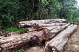 Tropical Wood  Logs For Sale - Wamara wood logs