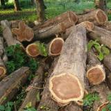 Tropical Wood  Logs - TEAK ROUND AND SQAURE WOOD LOGS