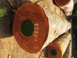 Tropical Wood  Logs - DEBEMA WOOD LOGS