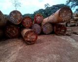 Offers FARO WOOD LOGS AND LUMBER