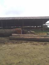 Offers EMIEN, PATTERNWOOD EKOUK AND ALSTONIA WOOD LOGS