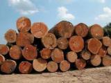 Tropical Wood  Sawn Timber - Lumber - Planed Timber - Keruing Wood Logs