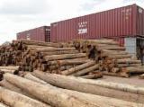 Tropical Wood  Sawn Timber - Lumber - Planed Timber - bosse wood logs