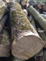 Saw Logs, Maple (Sycamore)(Europe)
