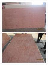 Natural Plywood, Bintangor (Calophyllum)