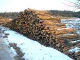Softwood  Logs - Pine Pulpwood