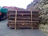 Softwood  Logs Fir Spruce Pine - construction round beams, Fir/Spruce/Pine