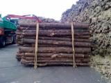 Softwood  Logs Germany - machine rounded posts, Fir/Spruce/Pine