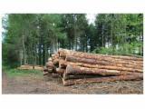 Nadelrundholz Zu Verkaufen Frankreich - Schnittholzstämme, Sitka-Fichte